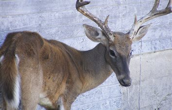TPWD Urges Hunters and Landowners to be Vigilant for Signs of Chronic Wasting Disease after Recent Tests Confirm CWD in White-tailed and Mule Deer in Existing Containment Zones