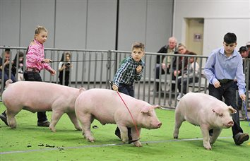 Local Kids Win Championship Honors at 2019 Annual Sutton County Junior Livestock Show